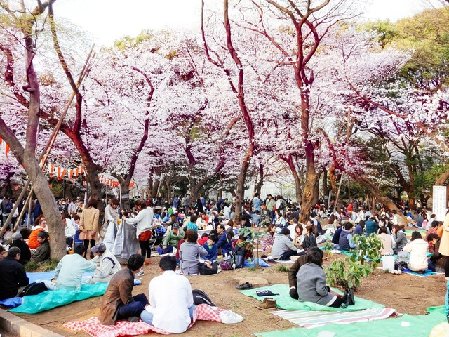 30b9fb6698acfb1bde551417441172fb481a9516 hanami picnic japan